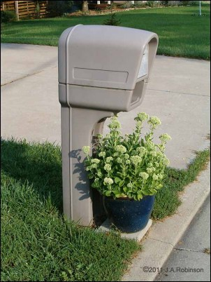 mailbox hovering over a potted plant