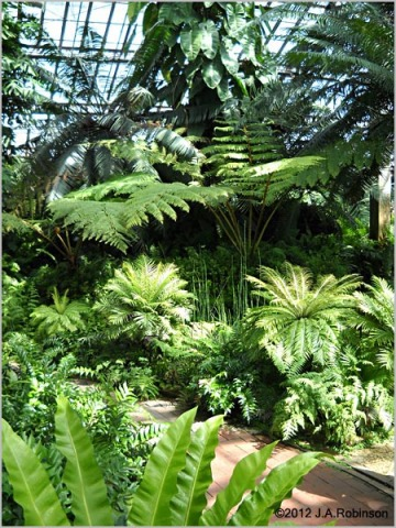 Lush, dense foliage and tropical trees surround a path in a conservatory.
