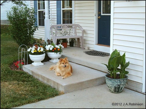 A dog is seen posing on the porch of a nice home.