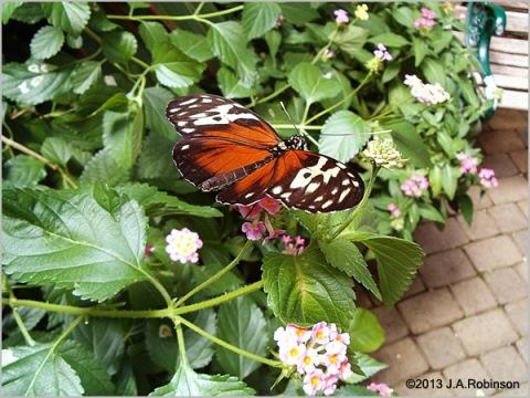 2013_09_26 Butterfly Exhibit