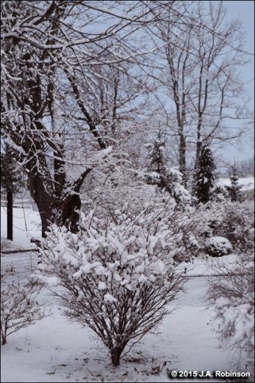 Jan 24 Snowfall 2