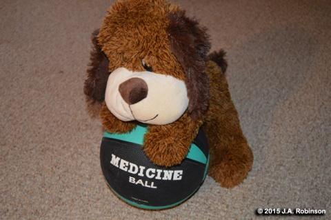 Dog on Medicine Ball