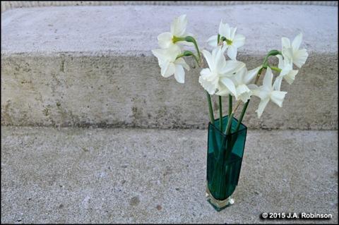 Spring Zen Flowers