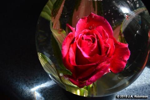 Rose in Aquarium