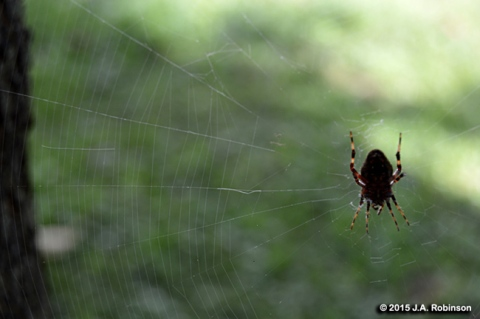 2015_10_05 Spider and Web