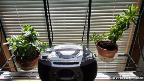 Two Plants with Radio
