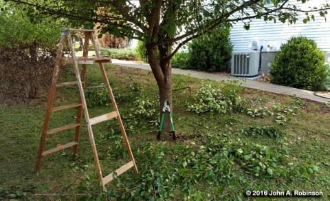 016_09_26-ladder-and-pruner