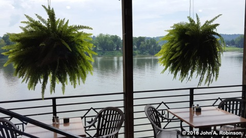 ferns-and-river