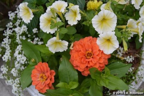 stoop-planter-closeup