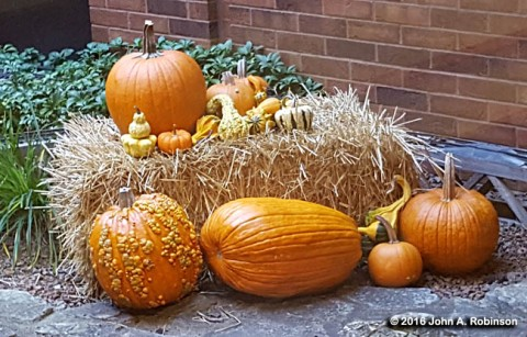 2016_11_30-high-and-low-pumpkins