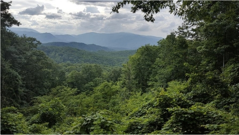 deep-in-the-great-smoky-mountains