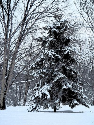 dg_snowy-pine_poster-edges